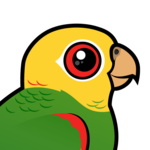 Yellow-headed Amazon