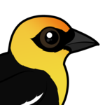 Birdorable Yellow-headed Blackbird