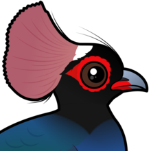 Crested Partridge