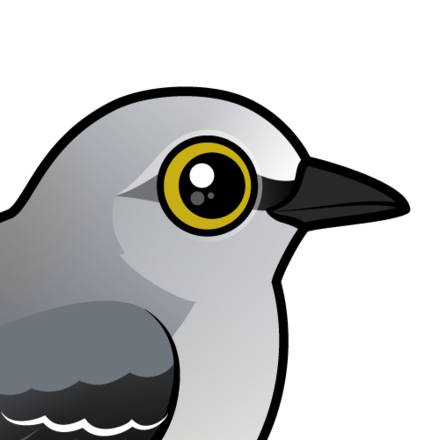 About The Northern Mockingbird