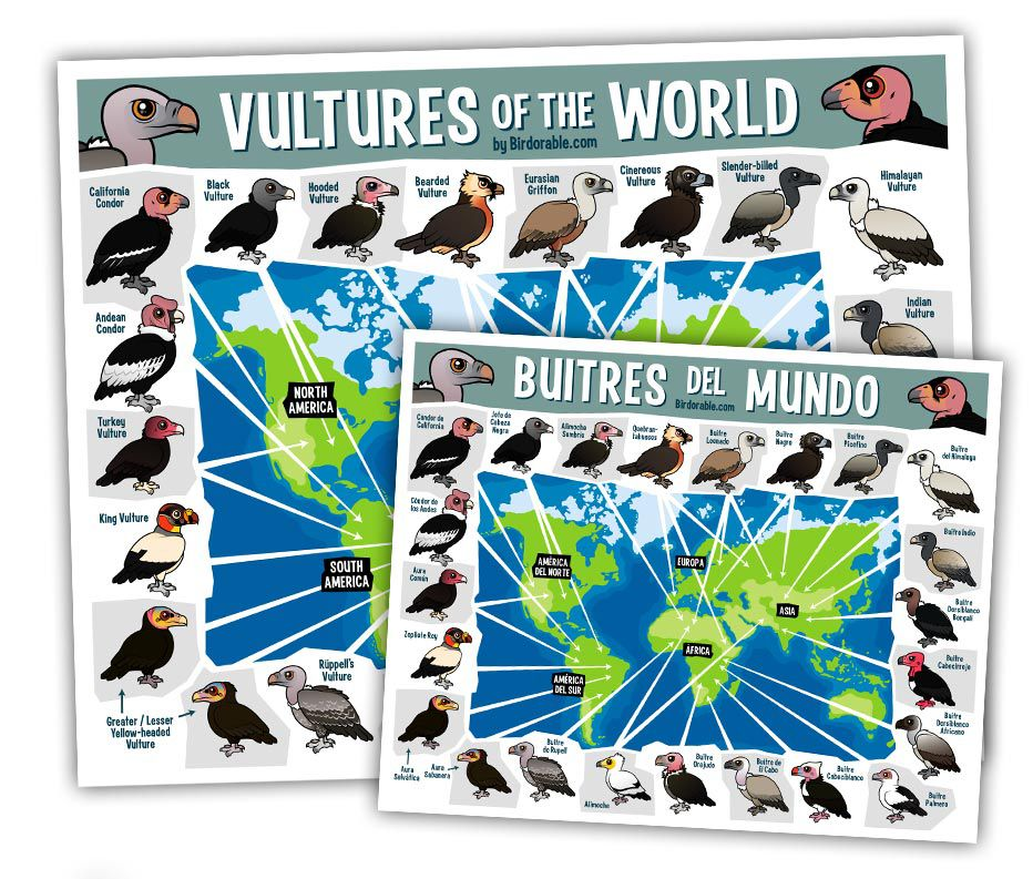 Birdorable Vultures of the World Map in English and Spanish