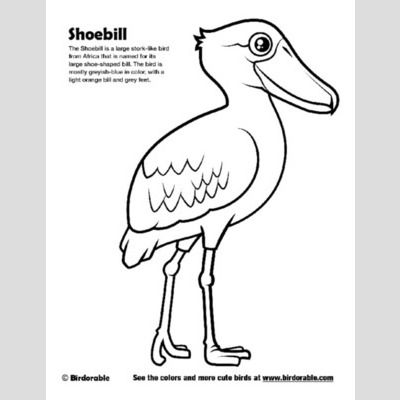 Cute Bird Coloring Pages Page 5 By Birdorable Free