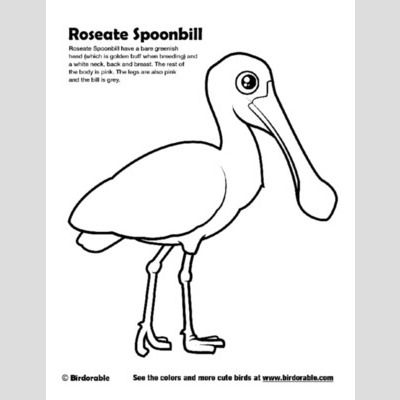 Roseate Spoonbill Coloring Page sample