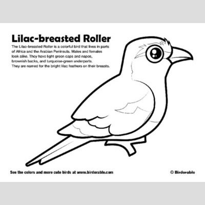 Lilac-breasted Roller Coloring Page sample