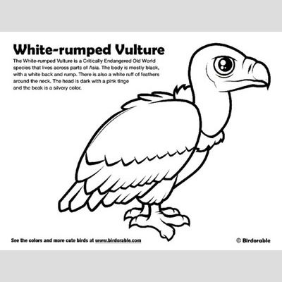 White-rumped Vulture Coloring Page sample