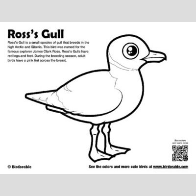 Ross's Gull Coloring Page sample