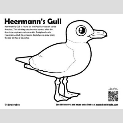 Heermann's Gull Coloring Page sample