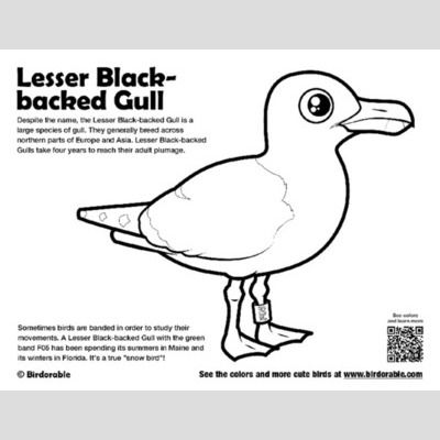 Lesser Black-backed Gull Coloring Page sample