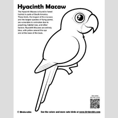 Hyacinth Macaw Coloring Page sample