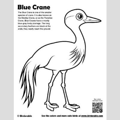 Blue Crane Coloring Page sample