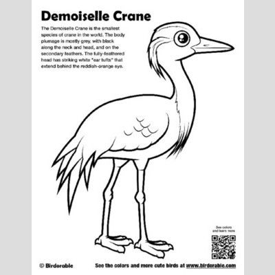 Demoiselle Crane Coloring Page sample