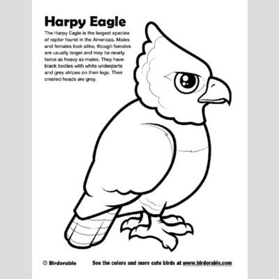 Harpy Eagle Coloring Page sample