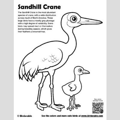 Sandhill Crane Coloring Page sample
