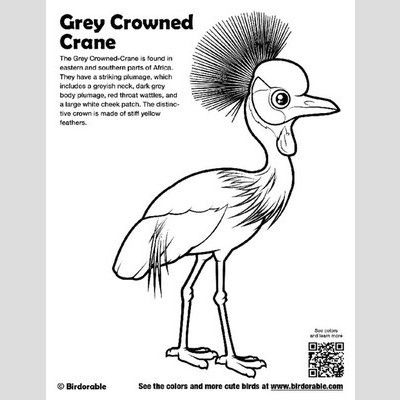 Grey Crowned-Crane Coloring Page sample