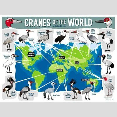 Cranes of the World Map sample