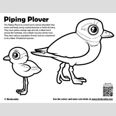 Piping Plover Coloring Page sample