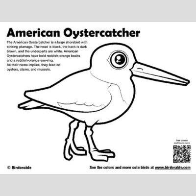 American Oystercatcher Coloring Page sample