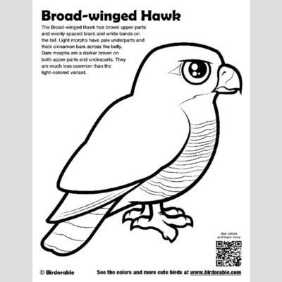Broad-winged Hawk Coloring Page sample