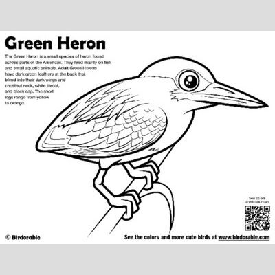 Green Heron Coloring Page sample