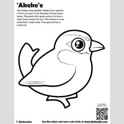 'Akeke'e Coloring Page sample