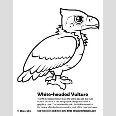 White-headed Vulture Coloring Page sample