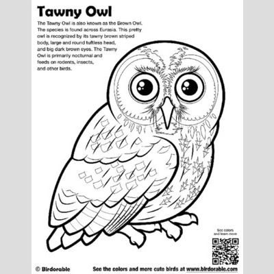 Tawny Owl Coloring Page sample