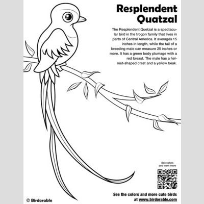 Resplendent Quetzal Coloring Page sample