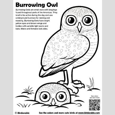 Burrowing Owl Coloring Page sample