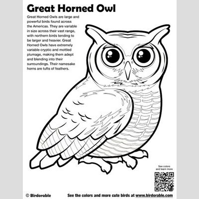great horned owl coloring pages - photo#10