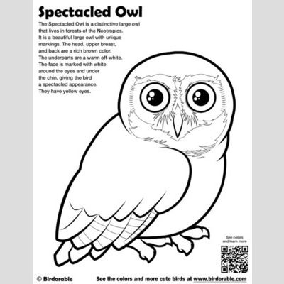 Spectacled Owl Coloring Page sample