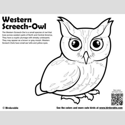 Western Screech-Owl Coloring Page sample