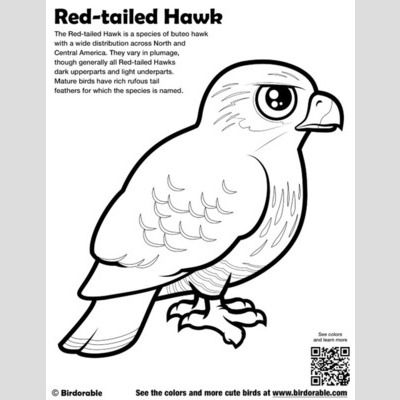 Red-tailed Hawk Coloring Page sample