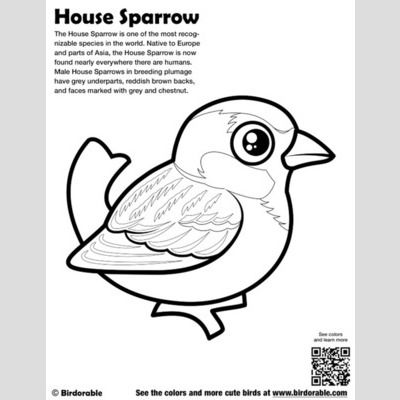 House Sparrow Coloring Page sample