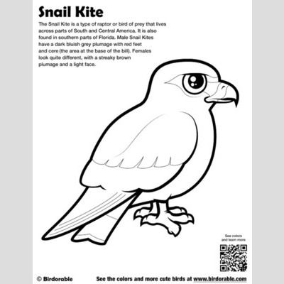 Snail Kite Coloring Page Fun Free Downloads Activity