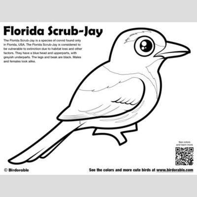 Florida Scrub-Jay Coloring Page sample
