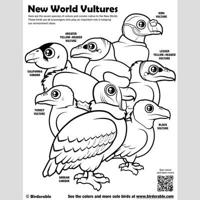 New World Vultures Coloring Page sample