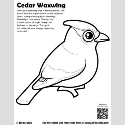 Cute Bird Coloring Pages by Birdorable Free Downloads