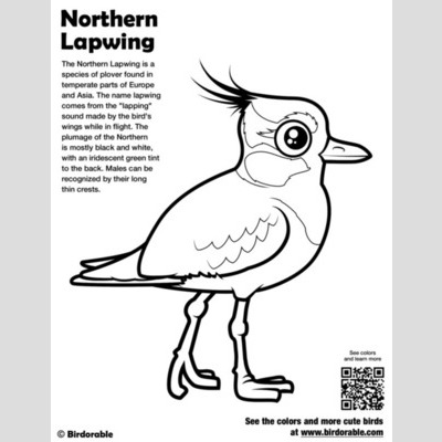 Northern Lapwing Coloring Page sample