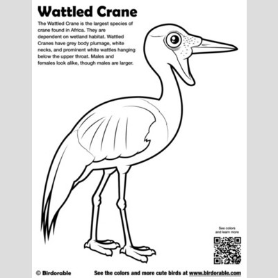 Wattled Crane Coloring Page sample