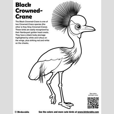 Black Crowned Crane Coloring Page