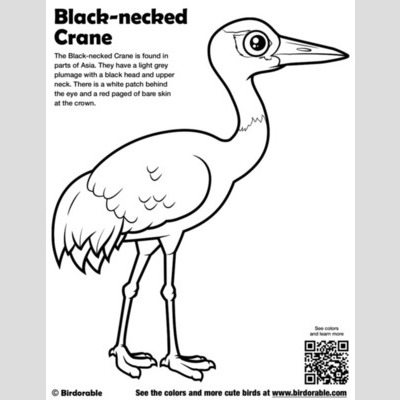 Black-necked Crane Coloring Page sample