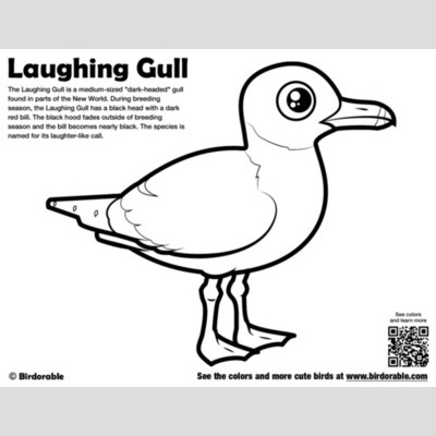 Laughing Gull Coloring Page sample