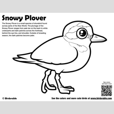 Snowy Plover Coloring Page sample