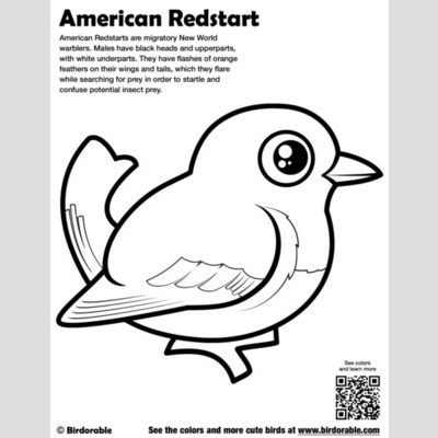 American Redstart Coloring Page sample