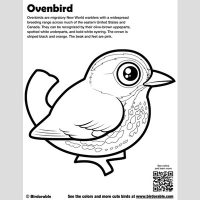 Ovenbird Coloring Page sample