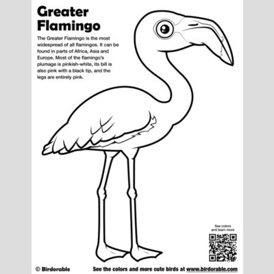 Greater Flamingo Color Page sample