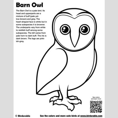 Barn Owl coloring page | Free Printable Coloring Pages | 400x400