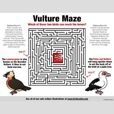 Vulture Maze sample