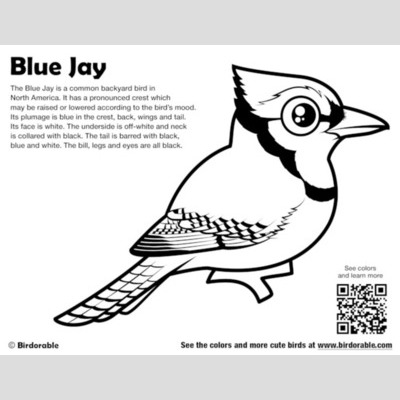 Cute Bird Coloring Pages By Birdorable - Free Downloads