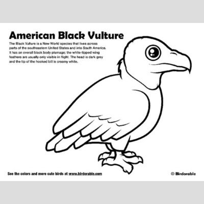 American Black Vulture Coloring Page sample